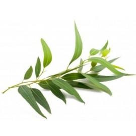 Flore et Sens Huile Essentielle d'Eucalyptus (20 ml)